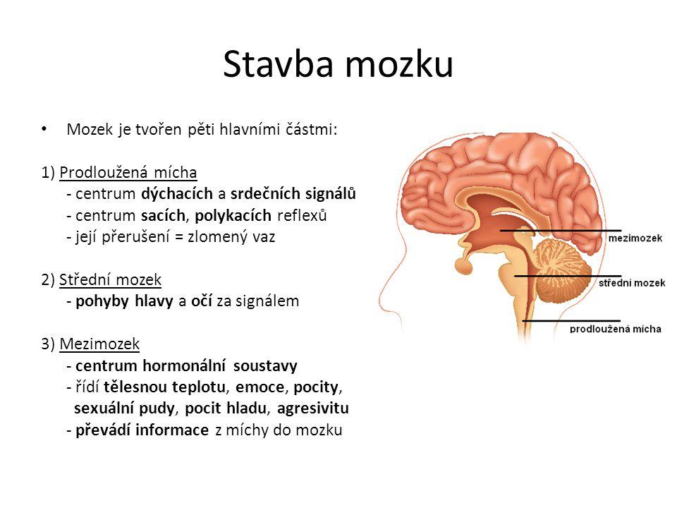 Stavba mozku Mozek je tvořen pěti hlavními částmi: 1) Prodloužená mícha - centrum dýchacích a srdečních signálů - centrum sacích, polykacích reflexů -