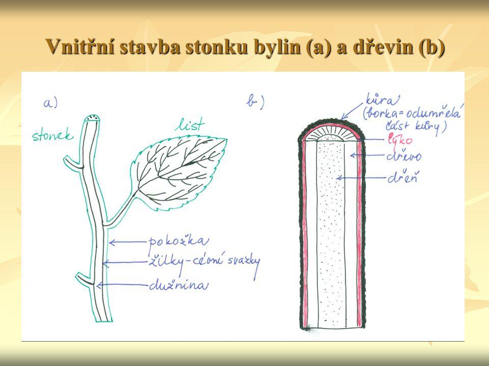 Vnitřní stavba stonku bylin (a) a dřevin (b)