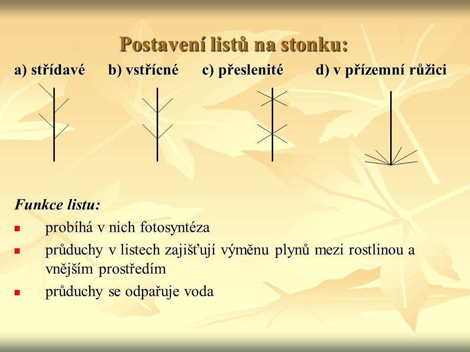 Postavení listů na stonku: a) střídavéb) vstřícnéc) přeslenité d) v přízemní růžici Funkce listu: probíhá v nich fotosyntéza probíhá v nich fotosyntéz