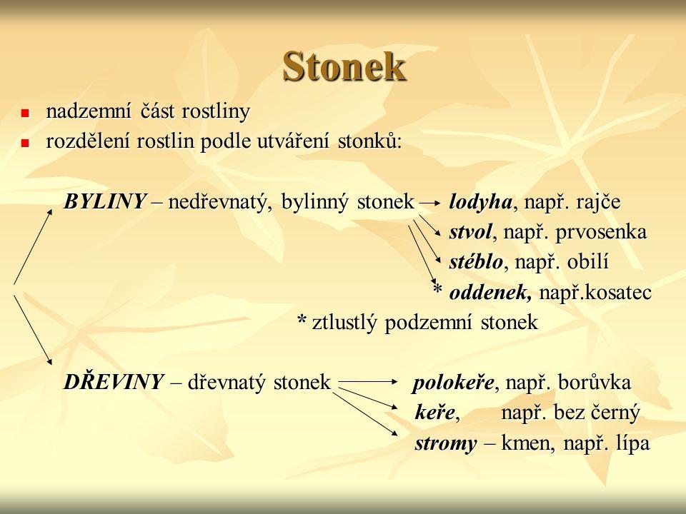 Stonek nadzemní část rostliny nadzemní část rostliny rozdělení rostlin podle utváření stonků: rozdělení rostlin podle utváření stonků: BYLINY – nedřev