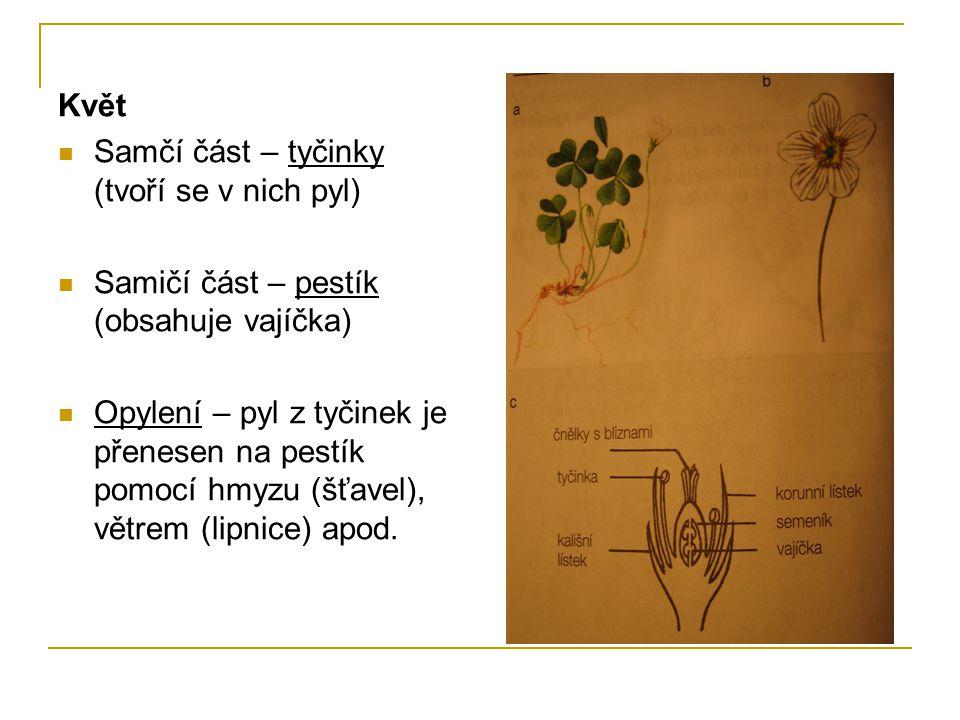 Květ Samčí část – tyčinky (tvoří se v nich pyl) Samičí část – pestík (obsahuje vajíčka) Opylení – pyl z tyčinek je přenesen na pestík pomocí hmyzu (šťavel), větrem (lipnice) apod.