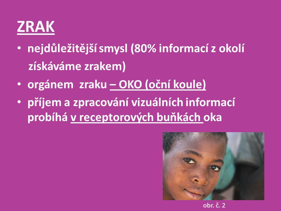 ZRAK nejdůležitější smysl (80% informací z okolí získáváme zrakem) orgánem zraku – OKO (oční koule) příjem a zpracování vizuálních informací probíhá v