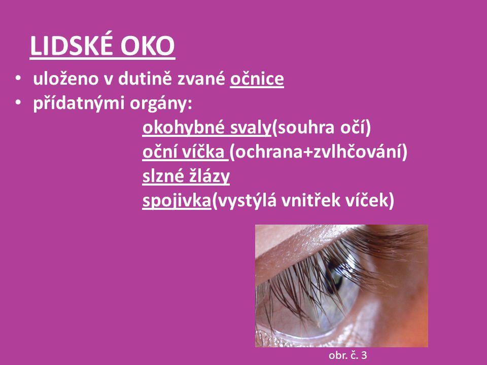 LIDSKÉ OKO obr. č. 3 uloženo v dutině zvané očnice přídatnými orgány: okohybné svaly(souhra očí) oční víčka (ochrana+zvlhčování) slzné žlázy spojivka(