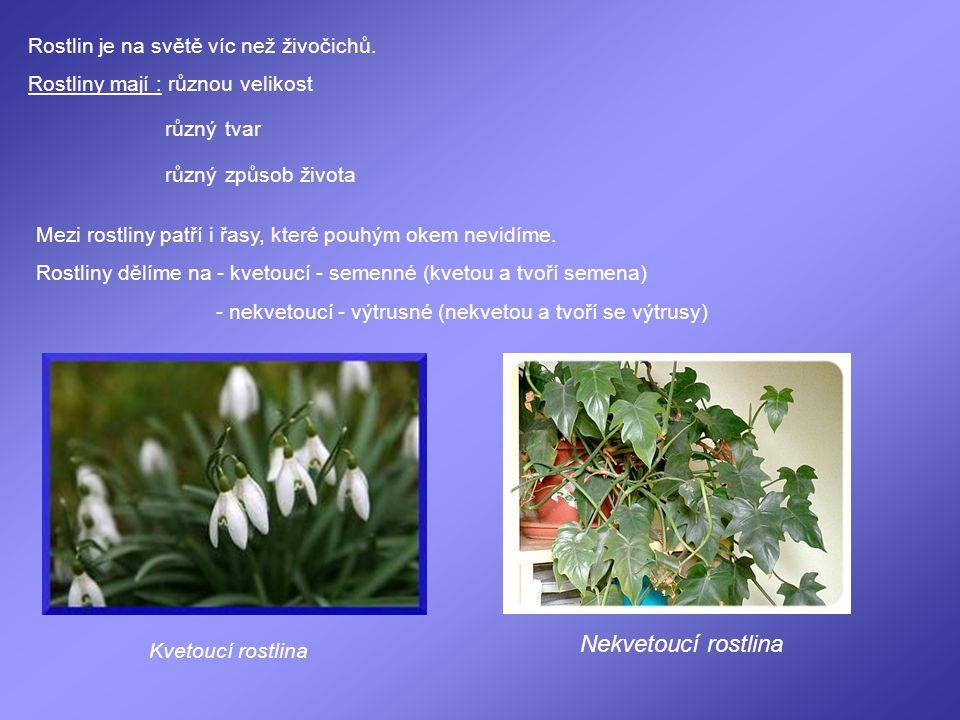 Rostlin je na světě víc než živočichů. Rostliny mají : různou velikost různýtvar různýzpůsob života Mezi rostliny patří i řasy, které pouhým okem nevi