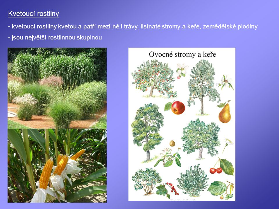Kvetoucí rostliny - kvetoucí rostliny kvetou a patří mezi ně i trávy, listnaté stromy a keře, zemědělské plodiny - jsou největší rostlinnou skupinou