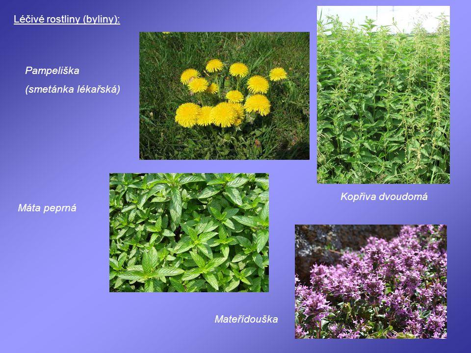 Léčivé rostliny (byliny): Pampeliška (smetánka lékařská) Kopřiva dvoudomá Máta peprná Mateřídouška