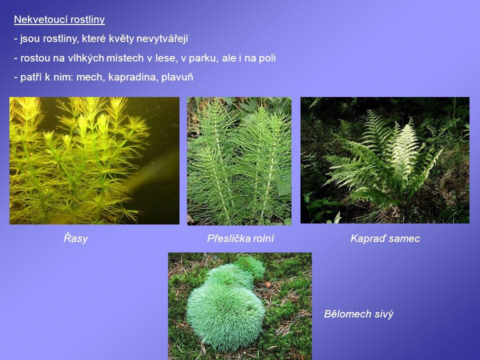 Nekvetoucí rostliny - jsou rostliny, které květy nevytvářejí - rostou na vlhkých místech v lese, v parku, ale i na poli - patří k nim: mech, kapradina