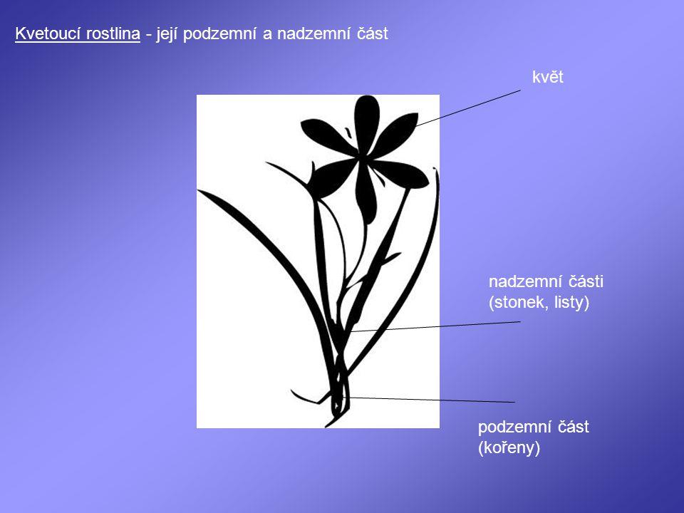 Kvetoucí rostlina - její podzemní a nadzemní část květ nadzemní části (stonek, listy) podzemní část (kořeny)