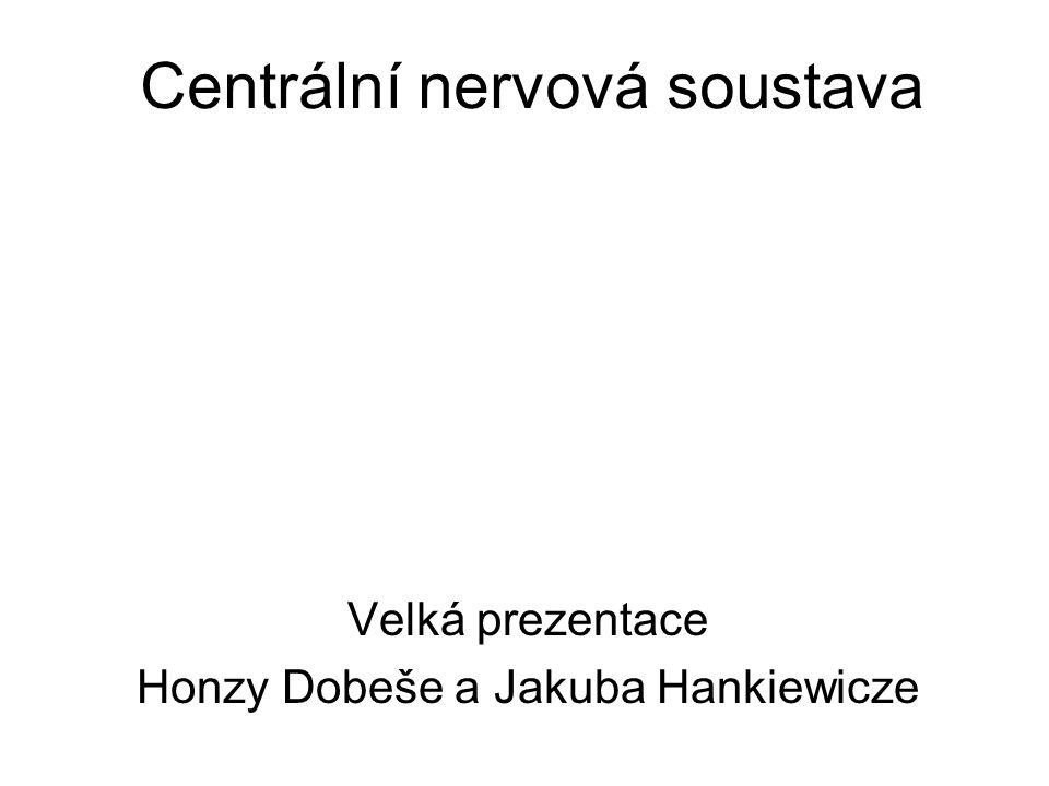 Centrální nervová soustava Velká prezentace Honzy Dobeše a Jakuba Hankiewicze