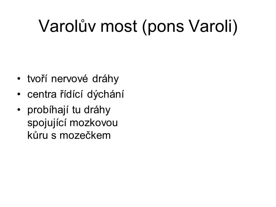 Varolův most (pons Varoli) tvoří nervové dráhy centra řídící dýchání probíhají tu dráhy spojující mozkovou kůru s mozečkem