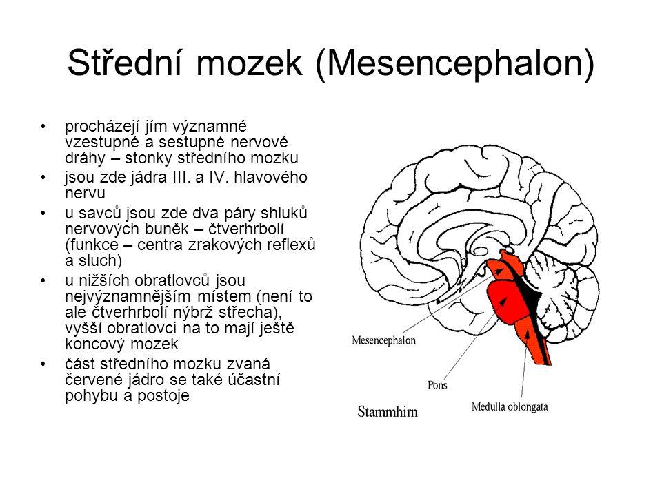 Střední mozek (Mesencephalon) procházejí jím významné vzestupné a sestupné nervové dráhy – stonky středního mozku jsou zde jádra III.