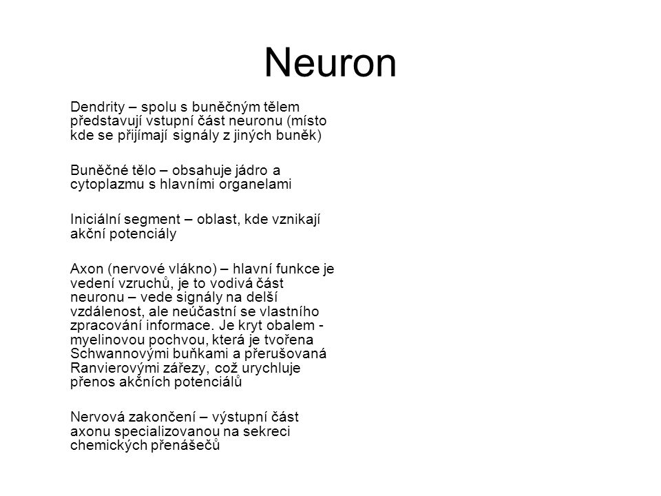 Neuron Dendrity – spolu s buněčným tělem představují vstupní část neuronu (místo kde se přijímají signály z jiných buněk) Buněčné tělo – obsahuje jádr