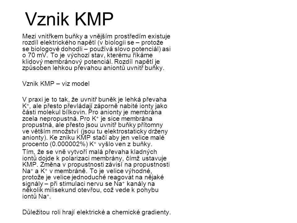 Vznik KMP Mezi vnitřkem buňky a vnějším prostředím existuje rozdíl elektrického napětí (v biologii se – protože se biologové dohodli – používá slovo potenciál) asi o 70 mV.