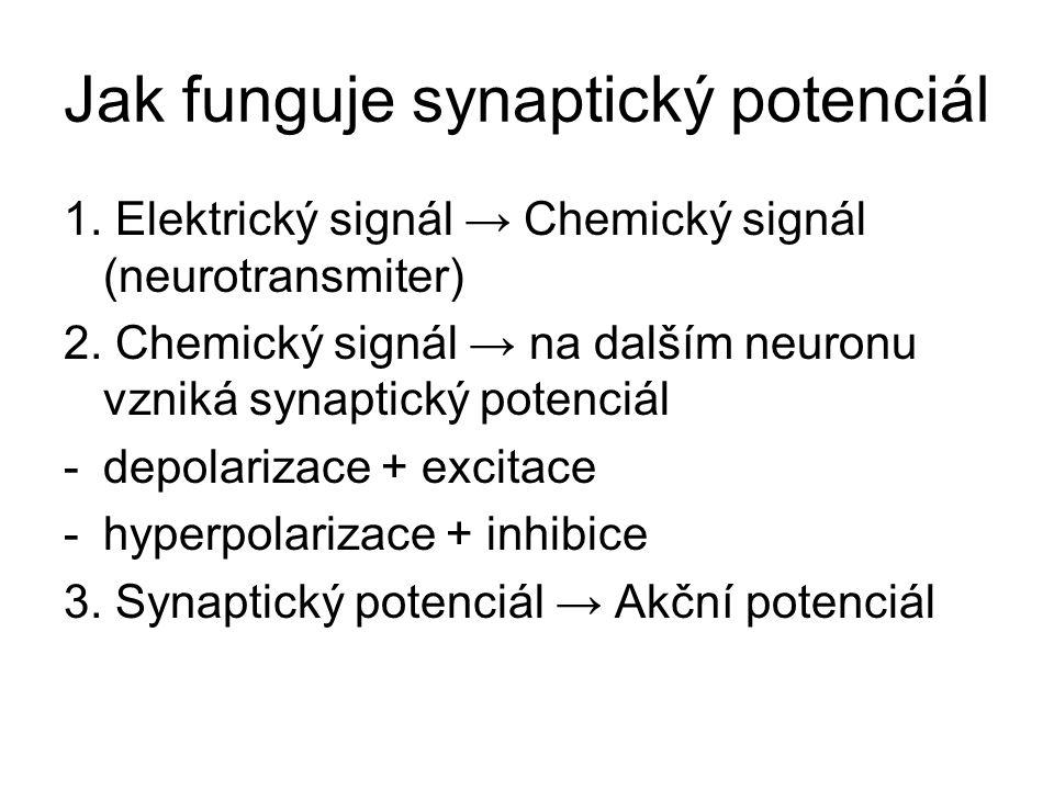 Jak funguje synaptický potenciál 1. Elektrický signál → Chemický signál (neurotransmiter) 2. Chemický signál → na dalším neuronu vzniká synaptický pot