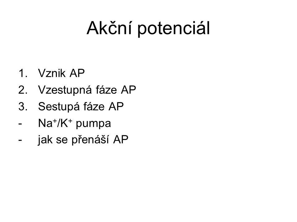 Akční potenciál 1.Vznik AP 2.Vzestupná fáze AP 3.Sestupá fáze AP -Na + /K + pumpa -jak se přenáší AP