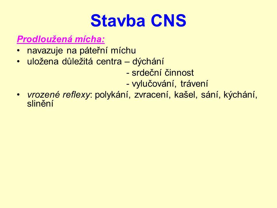 Stavba CNS Prodloužená mícha: navazuje na páteřní míchu uložena důležitá centra – dýchání - srdeční činnost - vylučování, trávení vrozené reflexy: polykání, zvracení, kašel, sání, kýchání, slinění