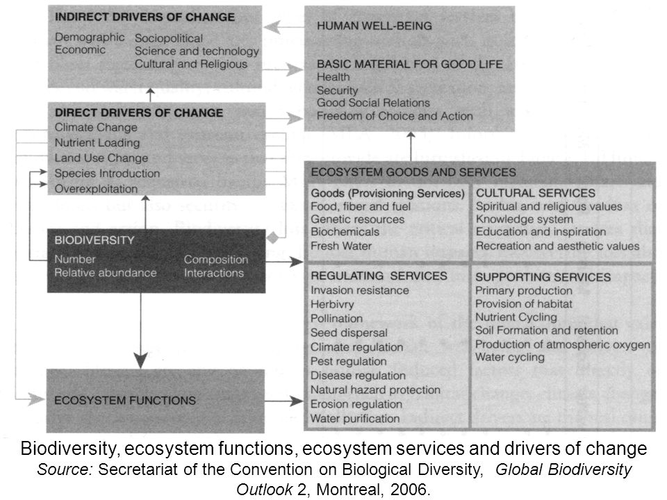Ecosystem unit LIVING ORGANISMS ENVIRONMENT FUNCTIONS / PROCESSES - biogeochemical cycles - energy dissipation ECOSYSTEM SERVICES UV protection detoxication water retention...