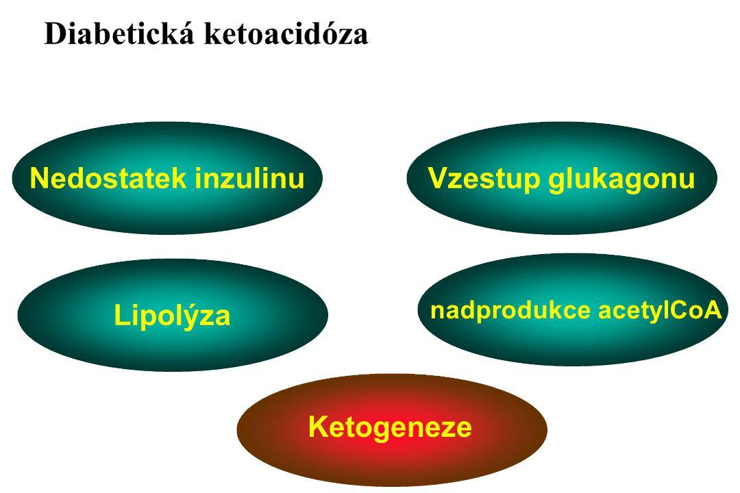 Symptomatologie DKA  Klinická  Polyurie  Polydipsie  Hubnutí  Acidotické dýchání  Porucha vědomí  Laboratorní  Hyperglykémie  Ketonémie  Metabolická acidóza  Zvýšení VMK  Hypertriacylglycerolé mie  Iontová dysbalance