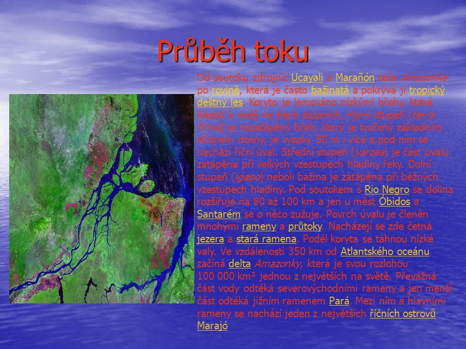 Průběh toku Od soutoku zdrojnic Ucayali a Marañón teče Amazonka po rovině, která je často bažinatá a pokrývá ji tropický deštný les. Koryto je lemován