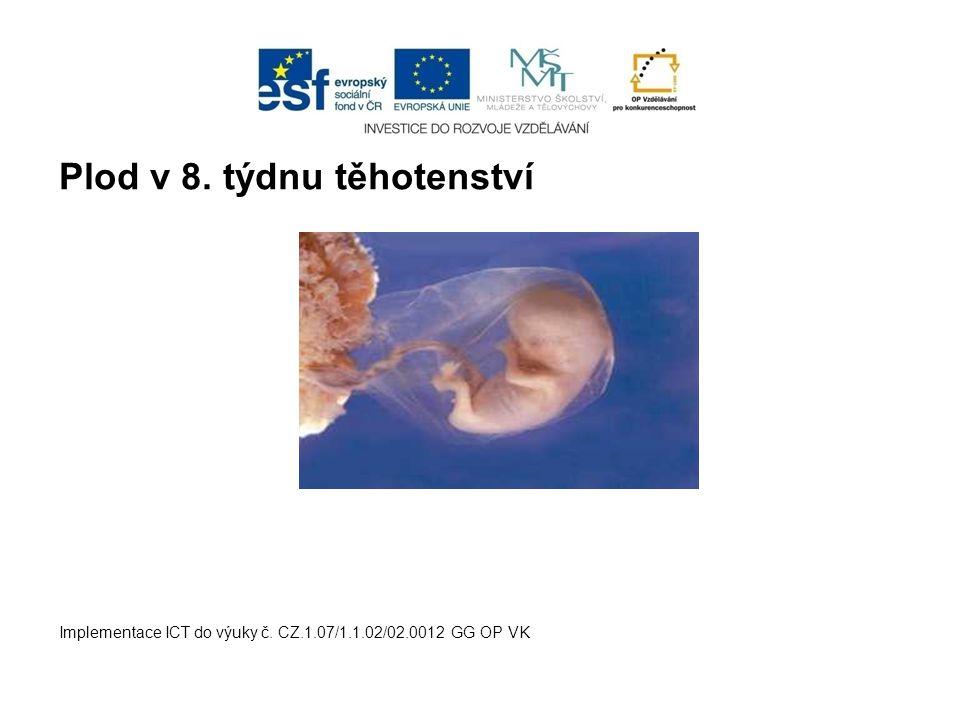 Plod v 8. týdnu těhotenství Implementace ICT do výuky č. CZ.1.07/1.1.02/02.0012 GG OP VK