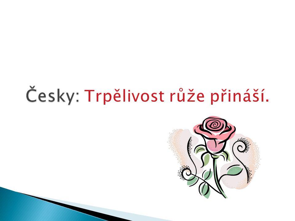 Česky: Česky: Trpělivost růže přináší.