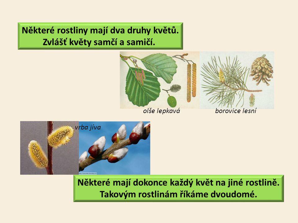 Některé mají dokonce každý květ na jiné rostlině. Takovým rostlinám říkáme dvoudomé. Některé rostliny mají dva druhy květů. Zvlášť květy samčí a samič