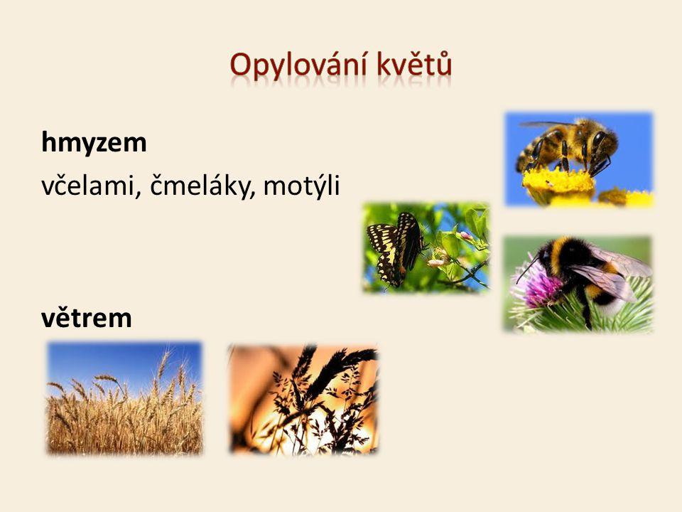 hmyzem včelami, čmeláky, motýli větrem