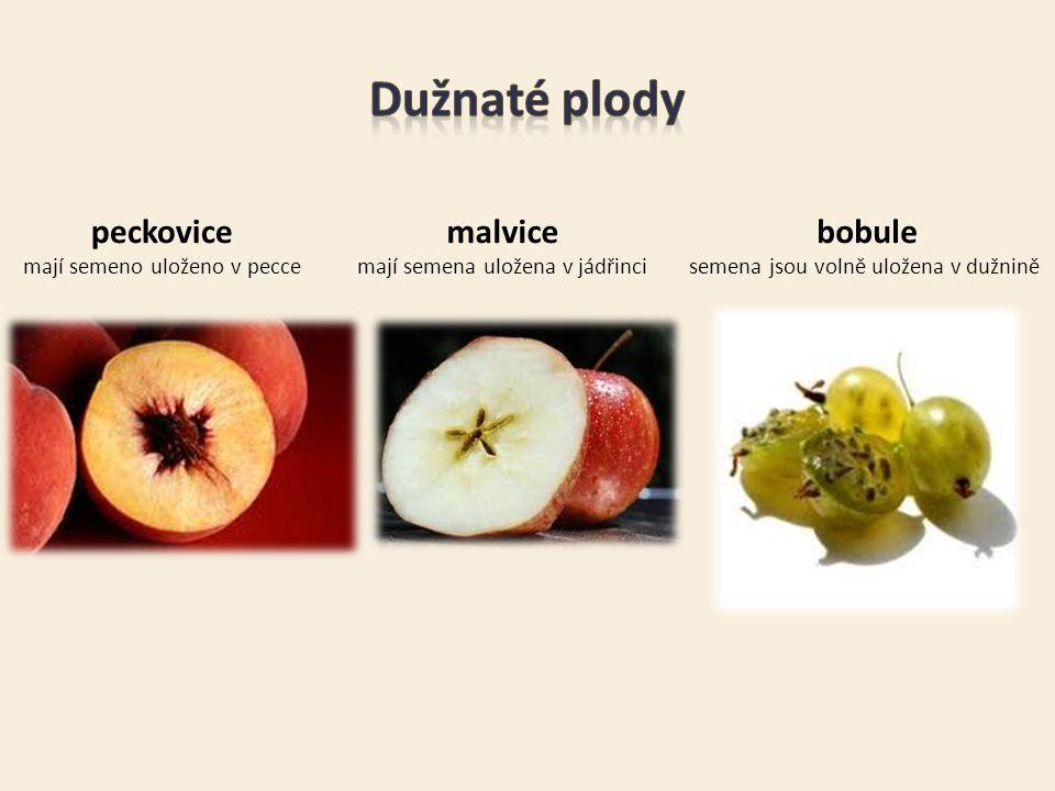 peckovice mají semeno uloženo v pecce malvice mají semena uložena v jádřinci bobule semena jsou volně uložena v dužnině