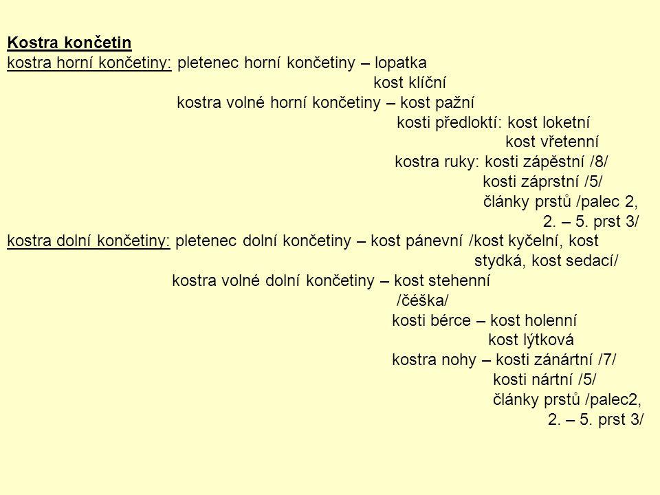 Kostra končetin kostra horní končetiny: pletenec horní končetiny – lopatka kost klíční kostra volné horní končetiny – kost pažní kosti předloktí: kost loketní kost vřetenní kostra ruky: kosti zápěstní /8/ kosti záprstní /5/ články prstů /palec 2, 2.