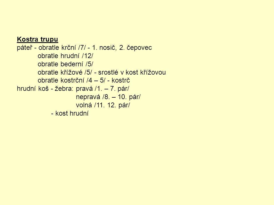Kostra trupu páteř - obratle krční /7/ - 1.nosič, 2.