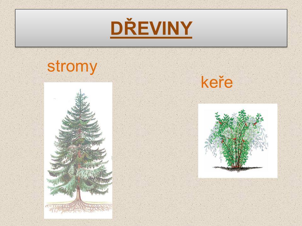 DŘEVINY stromy keře
