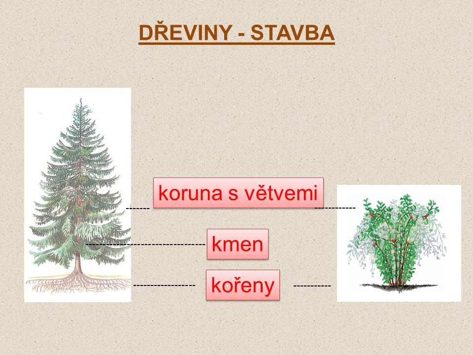DŘEVINY - STAVBA kořeny kmen koruna s větvemi ------------------ ----------- ---------------------------------- ------------ -------