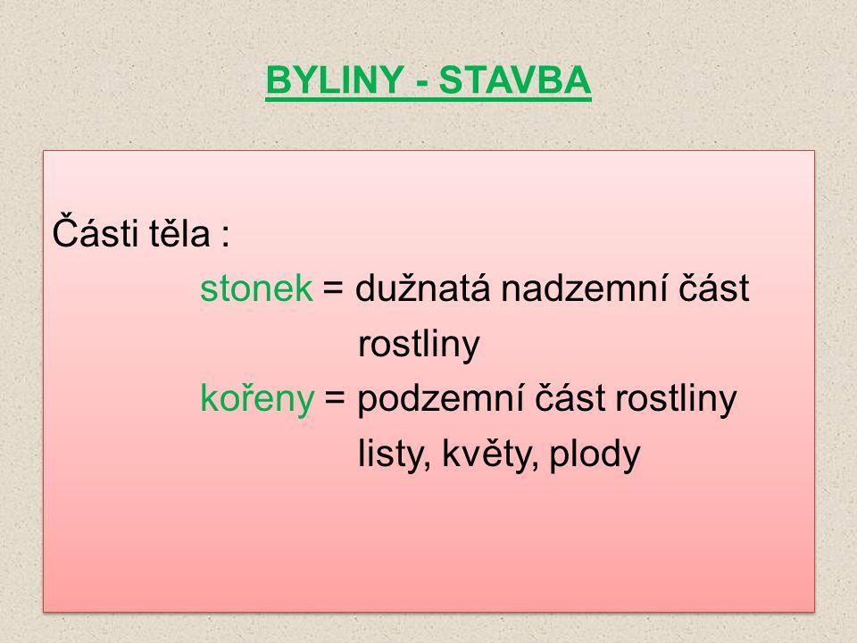 BYLINY - STAVBA Části těla : stonek = dužnatá nadzemní část rostliny kořeny = podzemní část rostliny listy, květy, plody Části těla : stonek = dužnatá