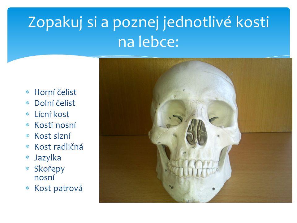 Zopakuj si a poznej jednotlivé kosti na lebce:  Horní čelist  Dolní čelist  Lícní kost  Kosti nosní  Kost slzní  Kost radličná  Jazylka  Skoře