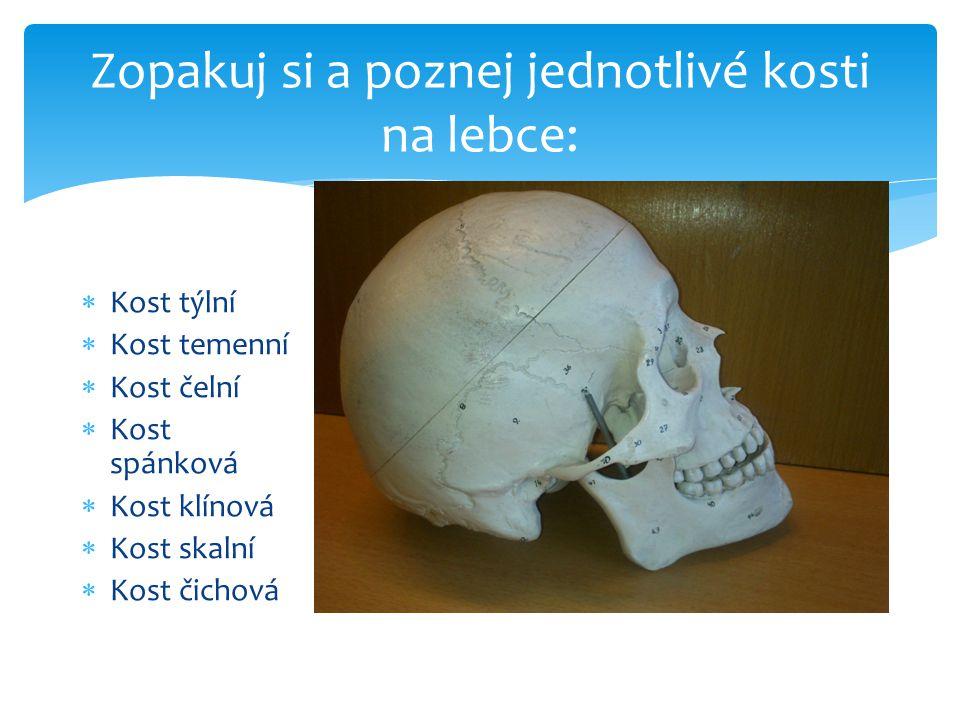 Zopakuj si a poznej jednotlivé kosti na lebce:  Kost týlní  Kost temenní  Kost čelní  Kost spánková  Kost klínová  Kost skalní  Kost čichová