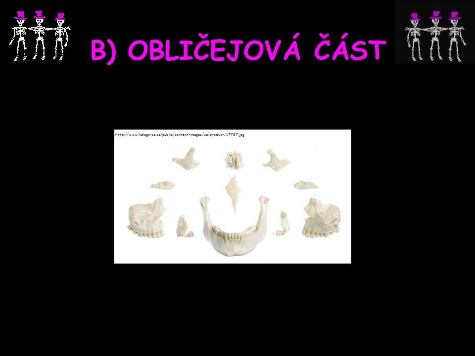 B) OBLIČEJOVÁ ČÁST http://www.helago-cz.cz/public/content-images/cz/product/17787.jpg