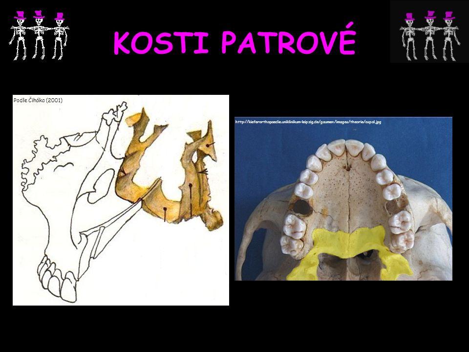KOSTI PATROVÉ Podle Čiháka (2001) http://kieferorthopaedie.uniklinikum-leipzig.de/gaumen/images/theorie/ospal.jpg