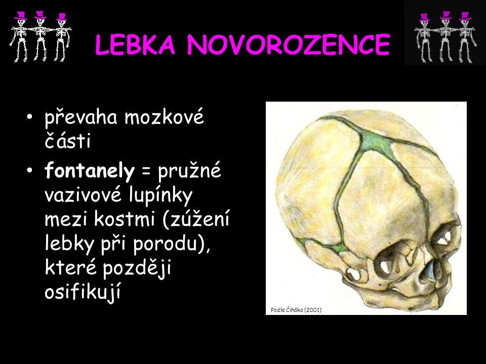 LEBKA NOVOROZENCE převaha mozkové části fontanely = pružné vazivové lupínky mezi kostmi (zúžení lebky při porodu), které později osifikují Podle Čihák