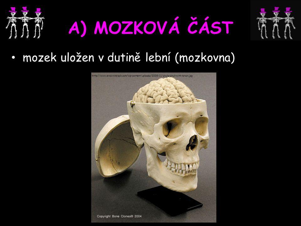 A) MOZKOVÁ ČÁST mozek uložen v dutině lební (mozkovna) http://www.drawninblack.com/wp-content/uploads/2008/11/skulls-skull-with-brain.jpg