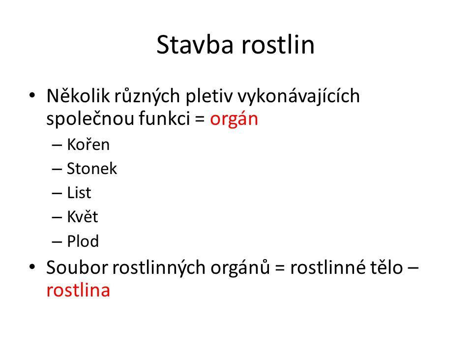 Stavba rostlin Několik různých pletiv vykonávajících společnou funkci = orgán – Kořen – Stonek – List – Květ – Plod Soubor rostlinných orgánů = rostlinné tělo – rostlina