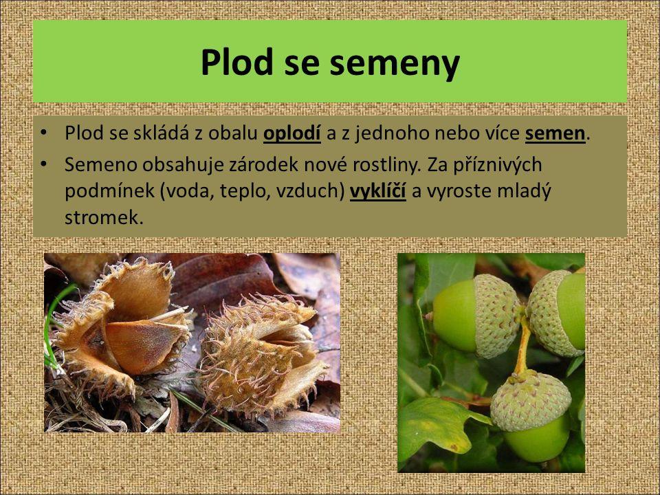 Plod se semeny Plod se skládá z obalu oplodí a z jednoho nebo více semen. Semeno obsahuje zárodek nové rostliny. Za příznivých podmínek (voda, teplo,