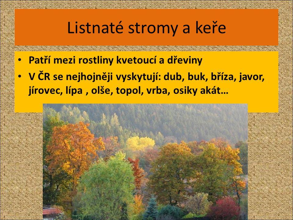 Listnaté stromy a keře Patří mezi rostliny kvetoucí a dřeviny V ČR se nejhojněji vyskytují: dub, buk, bříza, javor, jírovec, lípa, olše, topol, vrba,