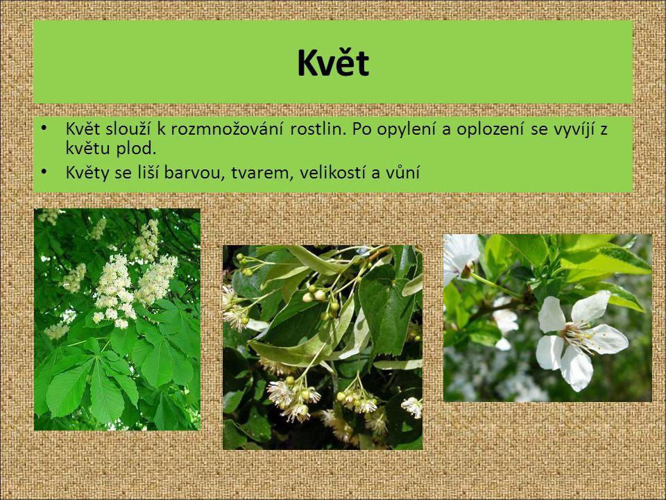 Květ Květ slouží k rozmnožování rostlin. Po opylení a oplození se vyvíjí z květu plod. Květy se liší barvou, tvarem, velikostí a vůní