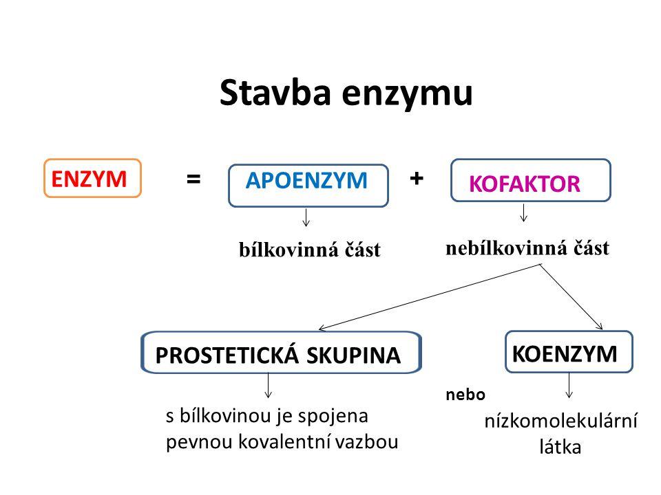 Typy kofaktorů pevně vázán na apoenzym (stabilní součást molekuly) - prostetická skupina slabě vázán na apoenzym  snadno se odděluje -koenzym apoenzym a koenzym tvoří holoenzym