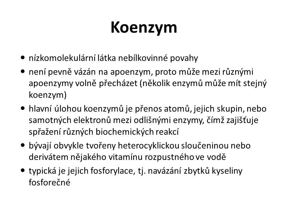 Koenzym nízkomolekulární látka nebílkovinné povahy není pevně vázán na apoenzym, proto může mezi různými apoenzymy volně přecházet (několik enzymů můž