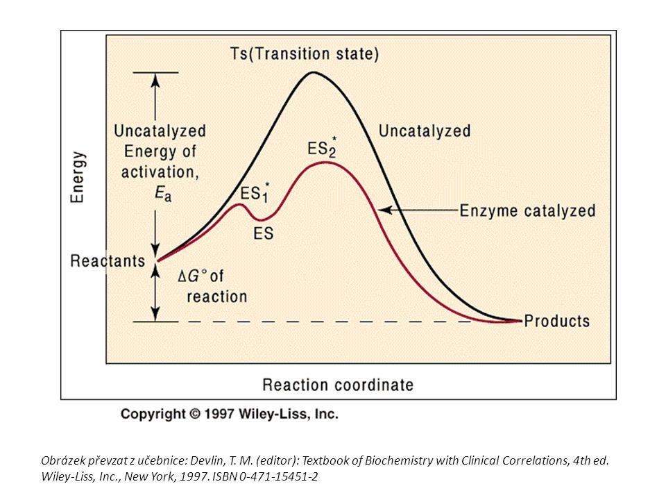 Působení enzymů katalýzy se účastní jen část molekuly - aktivní centrum (část apoenzymu tvořená určitými aminokyselinami) - váže se na něj substrát tvar substrátu odpovídá tvaru aktivního centra- substrát zapadá jako klíč do zámku po proběhnutí chemické reakce se uvolňují v nezměněné podobě, nespotřebovávají se