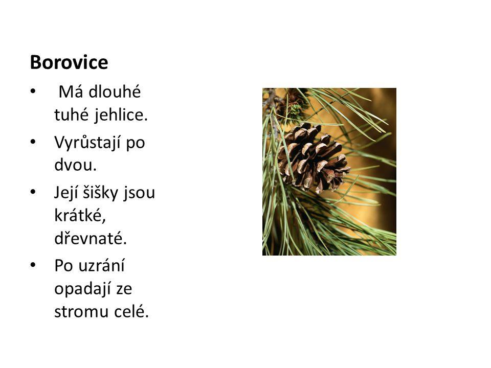 Borovice Má dlouhé tuhé jehlice. Vyrůstají po dvou. Její šišky jsou krátké, dřevnaté. Po uzrání opadají ze stromu celé.