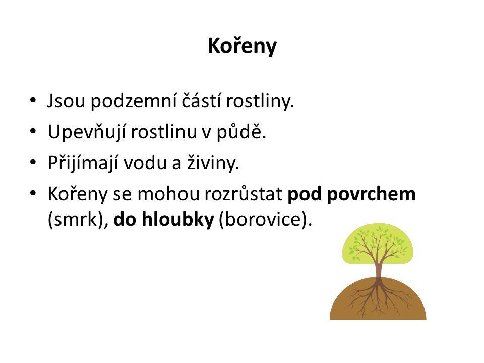 Kořeny Jsou podzemní částí rostliny. Upevňují rostlinu v půdě. Přijímají vodu a živiny. Kořeny se mohou rozrůstat pod povrchem (smrk), do hloubky (bor