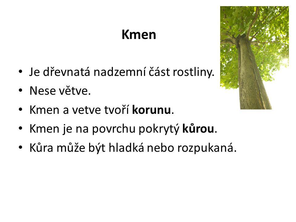 Kmen Je dřevnatá nadzemní část rostliny.Nese větve.