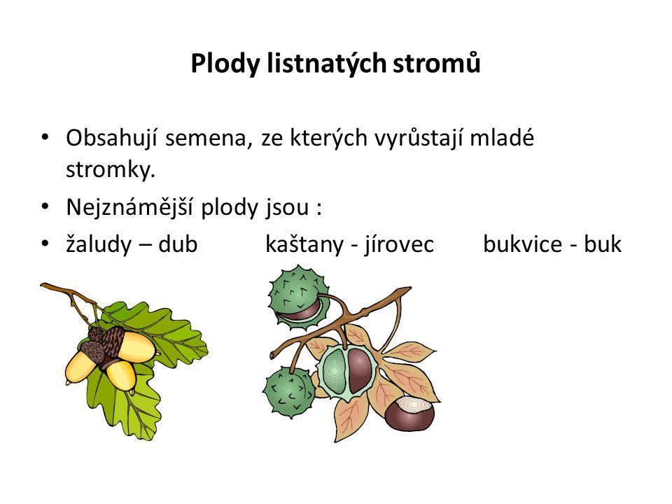Plody listnatých stromů Obsahují semena, ze kterých vyrůstají mladé stromky. Nejznámější plody jsou : žaludy – dub kaštany - jírovec bukvice - buk